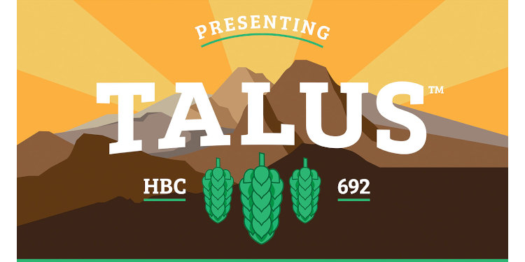 Introducing Talus - a new hop variety.